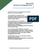Solucion Ciclo Biogeoquimico Del Carbono 1031