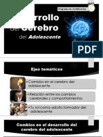 Cerebro de desarrollo
