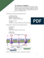 Folleto Procesos Celulares El Genoma y La Herencia Modificado Para Sumilla 2010