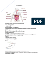 Le Systeme Digestif
