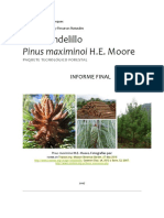PINO CANDELILLO.pdf