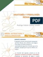 AnatomiayFisiologiaRenal 2
