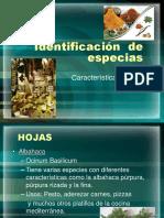 Identificación  de especias.ppt