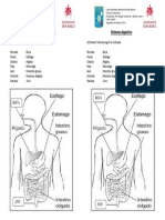 GUÍA DE CIENCIAS ORGANOS sistema digestivo 2019.pdf