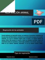 Respiración Animal