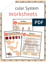 Sample Muscular System Worksheets