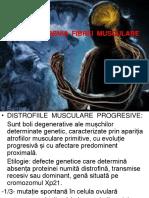 DISTROFIILE MUSCULARE PROGRESIVE.ppt