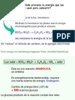 Metabolismo-sintesis