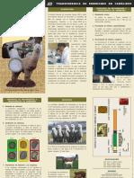 Trip-Embriones_camelidos.pdf