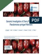 Genomic Investigation of Cherry Pathogenic Pseudomonas syringae Pathovars
