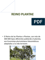 Reino Plantae.ppt