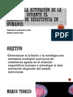 4. Falta de Activación de la Mitofagia Durante el Ejercicio de Resistencia en Humanos (EXPO9.pdf