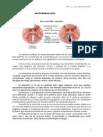 Ficha - Oratoria