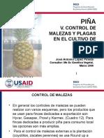 USAID_RED_5_Piña_Malezas_Plagas_03_06