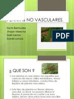 Plantas No Vasculares.