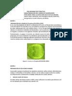 inorganica fluorescencia complejo