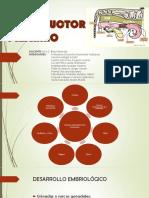 Sistema Reproductor Hembra