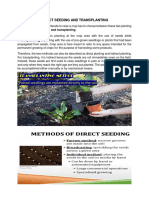 Direct Seeding and Transplanting