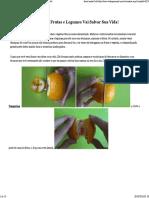 Como descascar frutas e legumes