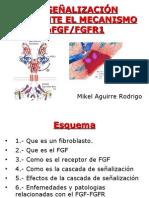 fgf-fgfr.presentacion