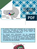2.5. Sistema limbico.ppt
