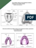 Anatomia Protetica Estructuras