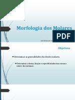 AULA 5 - Morfologia Dos Molares