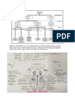 Resumen evaluacion neurospsicologica