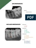 Dentoalveolares.docx