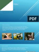Fauna Del Peru