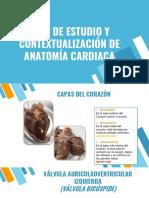anatomia del corazon-convertido