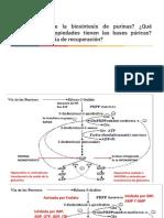 Purinas-y-pirimidinas.pdf