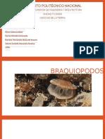 Braquiopodos