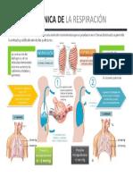 Mecanismo de Respiracion