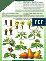 estados_fenologicos.pdf