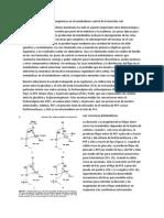 Alteración de Las Válvulas Bioquímicas en El Metabolismo Central de Escherichia Coli (1)