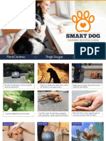 Smart Dog - Plan de Marketing