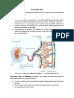 Circulación fetal.docx