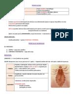 3. ANOPLURA - PEDICULOSIS