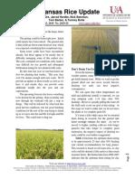 Arkansas Rice Update 8-23-19