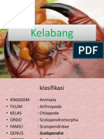 Kela Bang