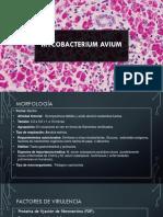 mycobacterium aviium