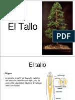 tallo-14