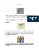 Protozoarios 1.1
