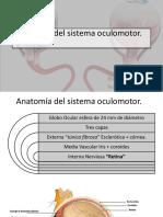 anatomía del vestíbulo