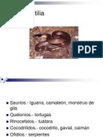 Clase Reptilia
