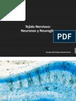 Clase 2. Neuronas y Neuroglia.pdf
