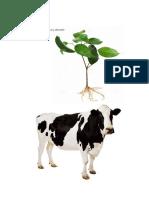 PARTES DE LA FLOR.pdf