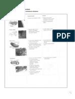 Estruturas Celulares - PDF