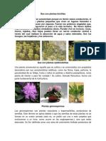 Que Son Plantas Briofitas